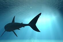 tips for swimming with the sharks
